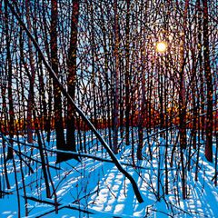"Tim Packer, Wintershine, 36""  x 36"", giclee on canvas"