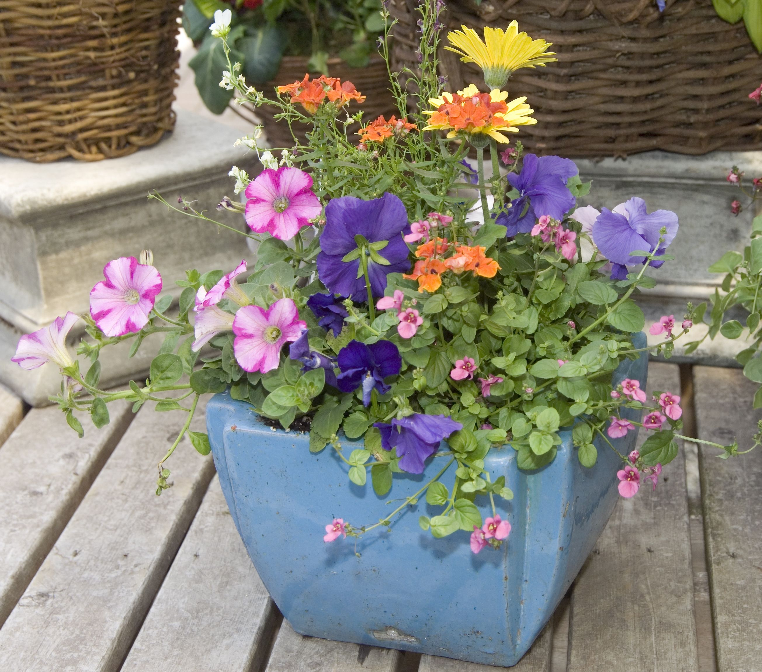 Pin By Chalet Nursery On Creative Container Gardens