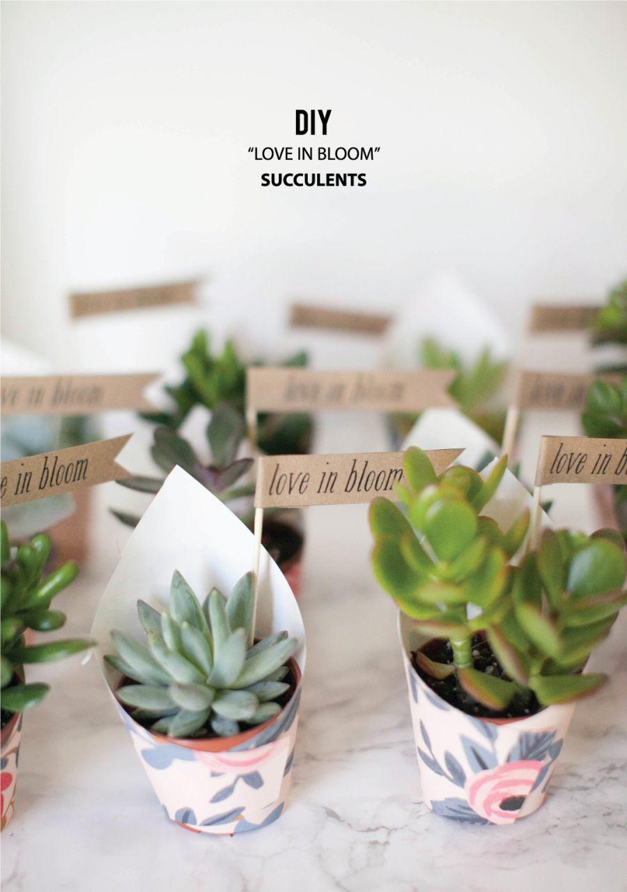 DIY \'Love In Bloom\' Succulent Favors | Succulent favors, Favors and ...