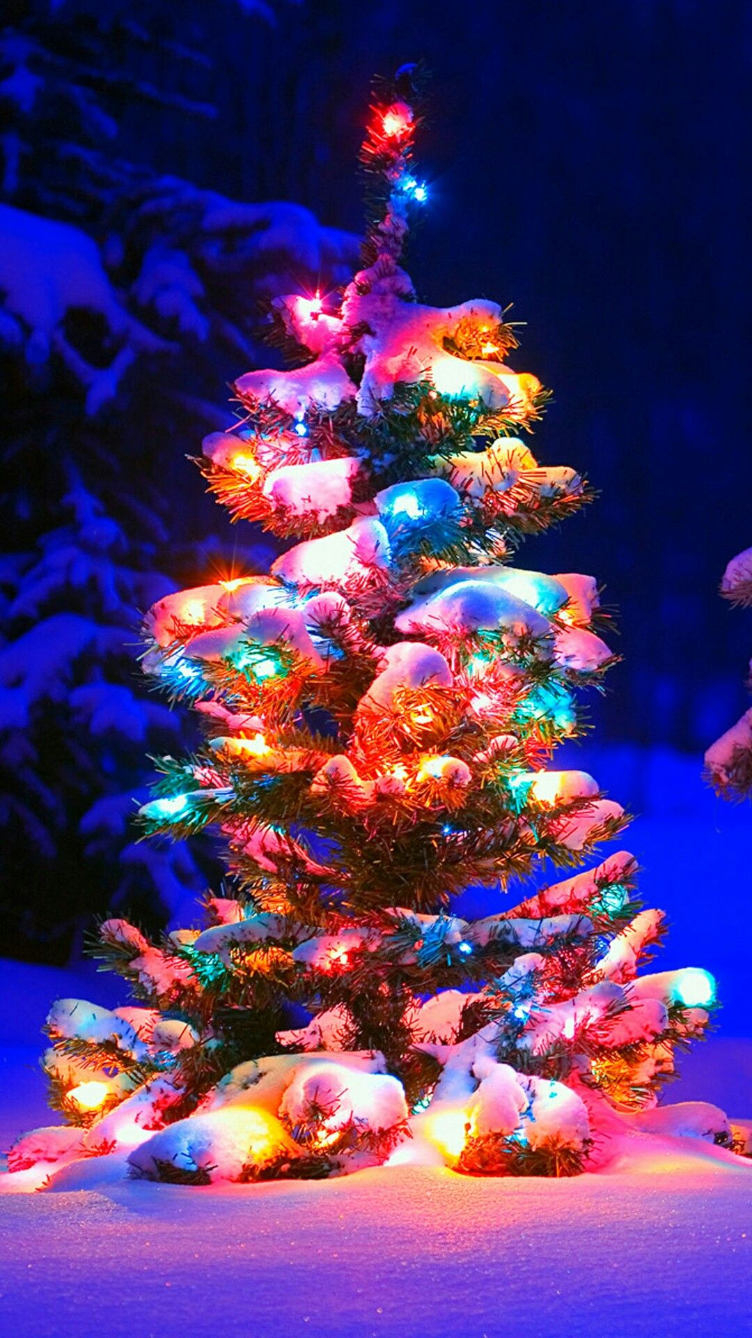 Christmas Christmas pictures Pinterest