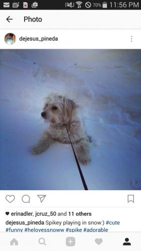 NAME Spike STATUS LOST GENDER Male SPECIES Dog DESCRIPTION