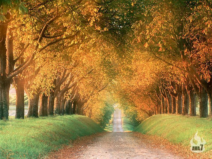 My One Day Tree Line Drive Tree Tunnel Country Roads World S Most Beautiful
