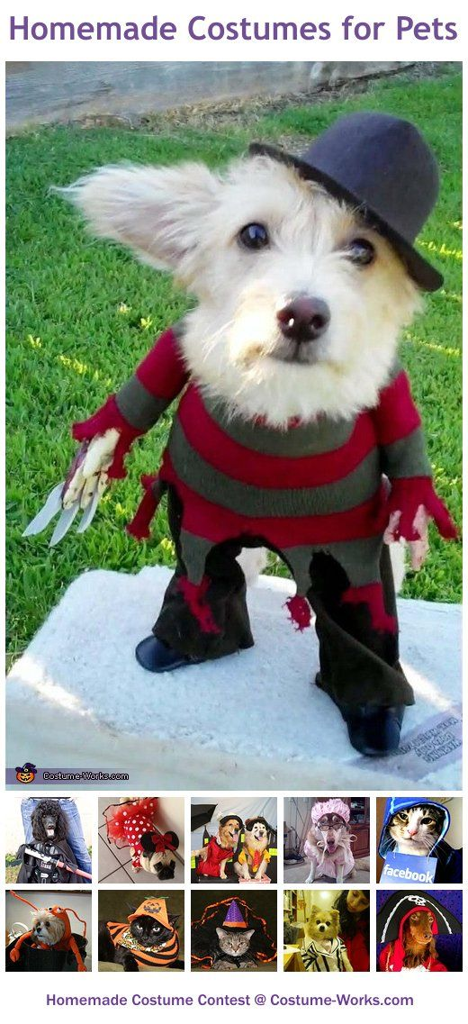 Homemade costumes for pets homemade costumes homemade halloween homemade costumes for pets a huge gallery of homemade halloween costumes solutioingenieria Choice Image