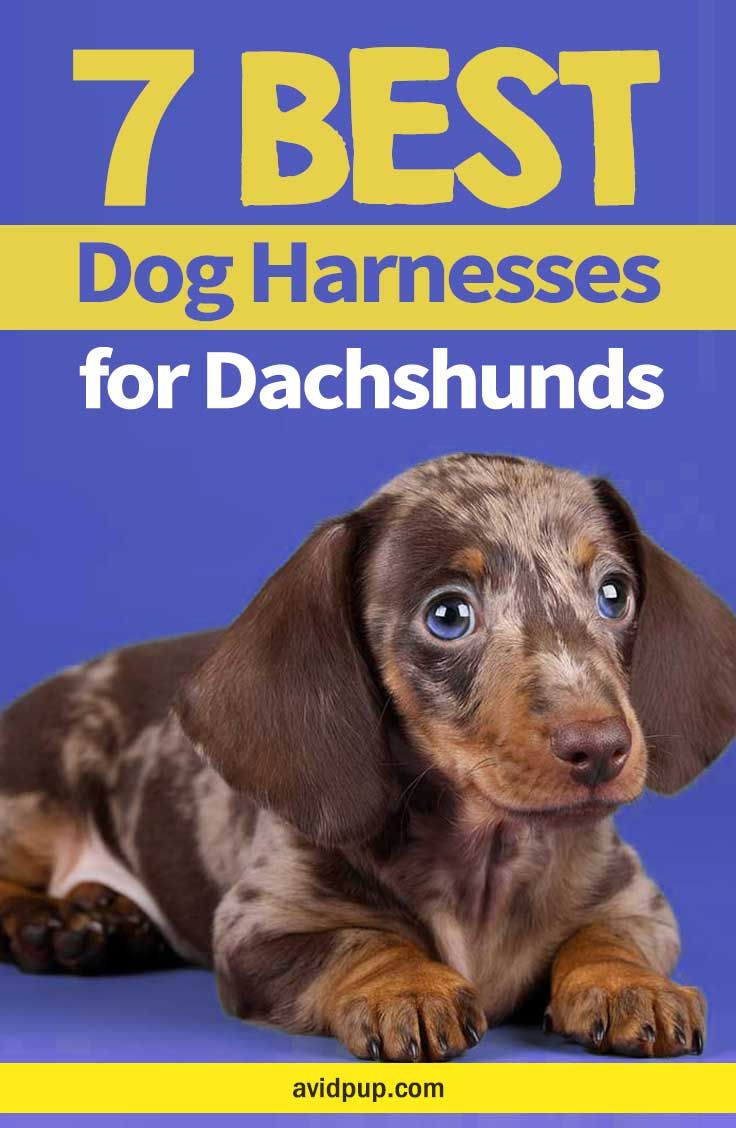 Top 7 Best Dog Harnesses For Dachshunds Dogharness Dachshund