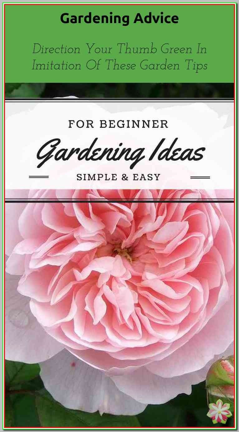 Don T Have A Green Thumb Get One With These Simple Gardening