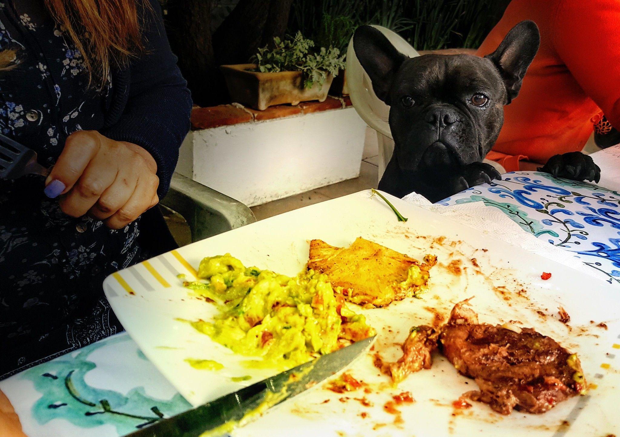 Es La Hora De Comer Y Cenar También Porque Mañana Será Otro Día French Bulldog Bulldog