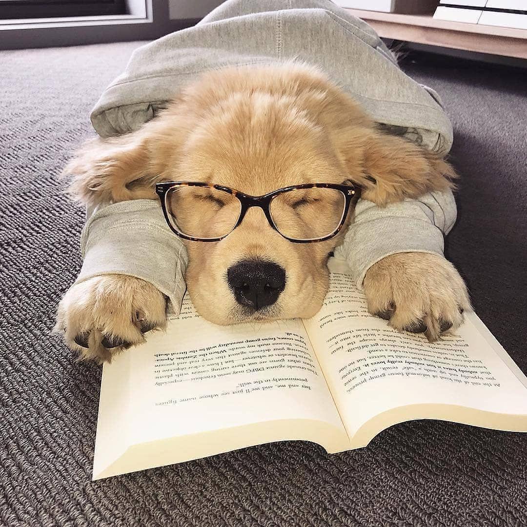 Reading Is Tiringhttps I Redd It Us9dovrn7zr11 Jpg Cute Funny
