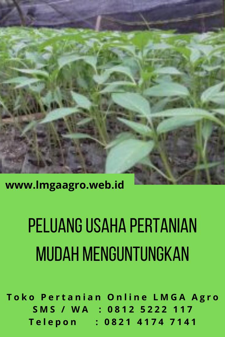 Peluang Usaha Pertanian Mudah Menguntungkan Bisnis Pertanian Petani