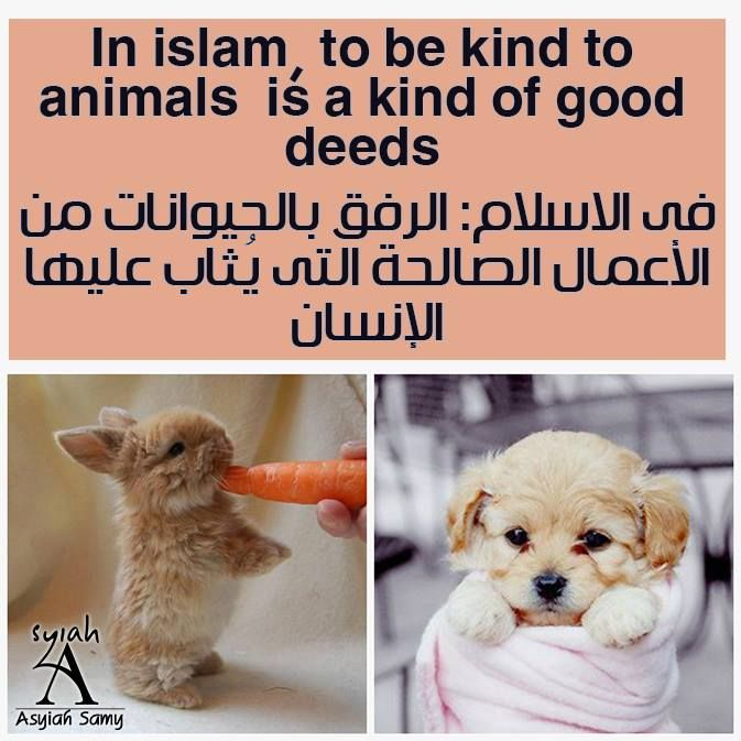 Islam Animals Muslims Allah Quran Asyiahsamy عربي الله مسلم يارب الرحمة Animals Amazing Stories Animal Lover
