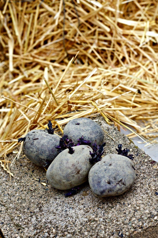 purple potatoes for the Easy DIY potato towers | Potato ...