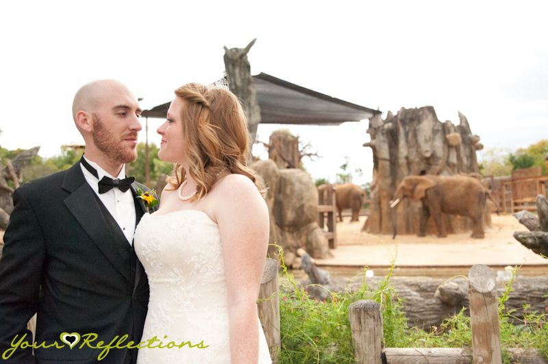 Knoxville ZOO · Wedding Wonderland · Mens Wearhouse · Lisa Foster Floral Designs · Buddy's BBQ · GiGi Cupcakes · All Occassions Party Rentals