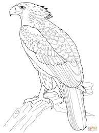 Harpy Eagle Easy Drawing Google Search