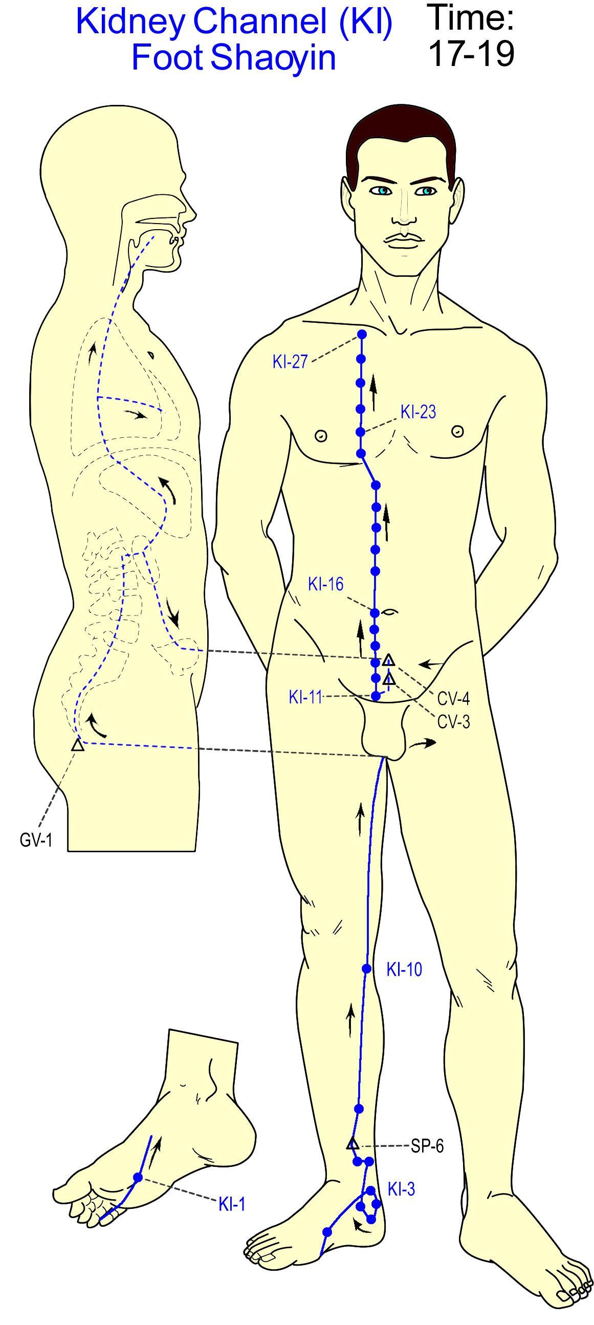 Kidney Channel Repinned by www.academ.nl/ & www.medischeqigong.com #qigong #acupuncture #health