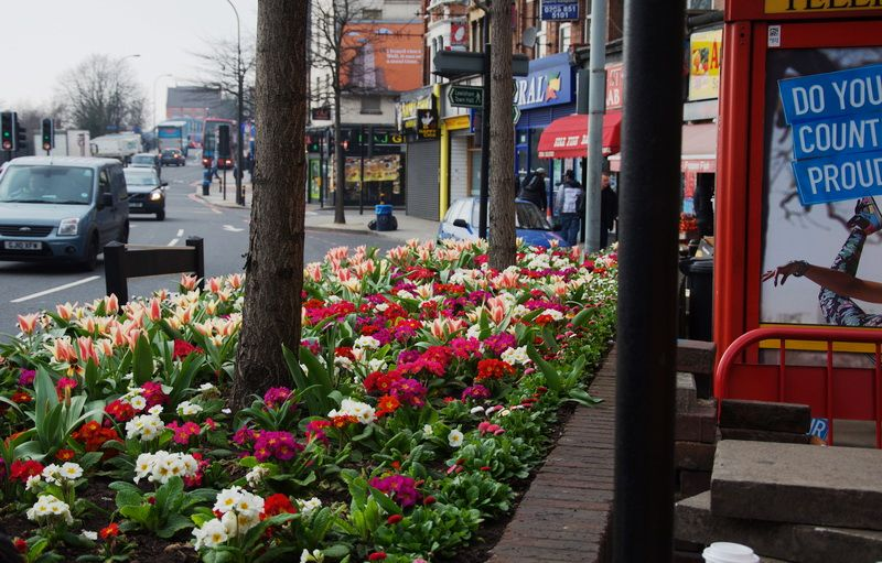 London ... I wish  I lived in a place where you can see flowers and clean roads in March