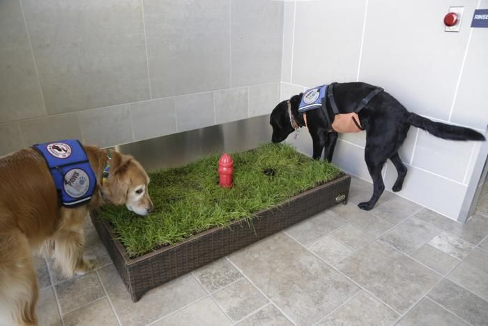 Score One For Fido Airport Adds 75 000 Dog Potty TVs Service Dogs And Th