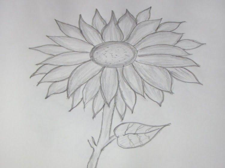Baru 30 Gambar Bunga Matahari Simple 39 Gambar Sketsa Bunga Indah Sakura Mawar Melati Dow Lukisan Bunga Matahari Menggambar Bunga Menggambar Bunga Matahari