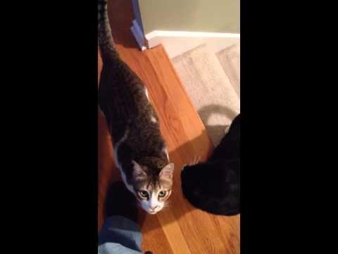 Солдат и кот ютуб