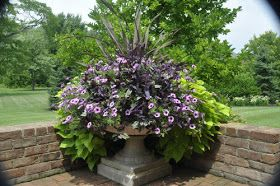 Thinking Outside The Boxwood: Green, Purple and Black Containers