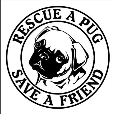 Pug Rescue Amen My Three Are Rescues Pugs Kisses Pugs