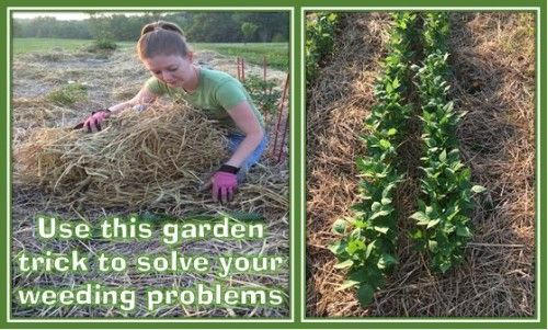 How Keep Weeds Out Your Garden