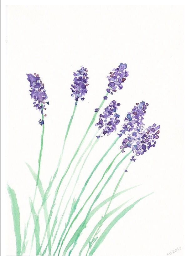 Lavender Watercolor Flowers Simple Watercolor Flowers