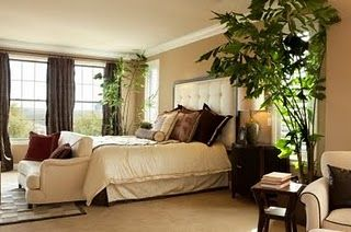 Feng Shui Plants Bedroom Memsaheb Net