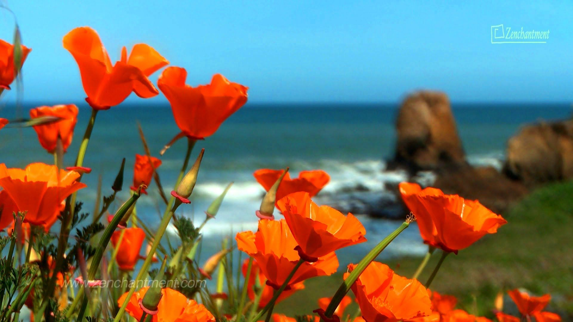 Zen Ocean Spring Wild Flowers of California's Coast