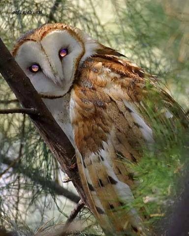 Such Beautiful Eyes!!!!