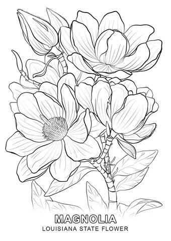 Louisiana State Flower Coloring Page Con Imagenes Paginas Para