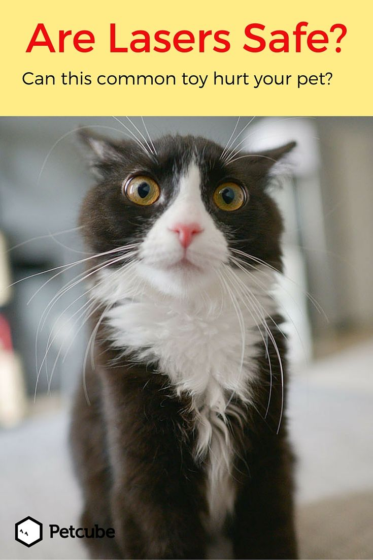 Cats And Laser Pointers Pros Cons And Safety Tips Crazy Cat Lady Crazy Cats Cats