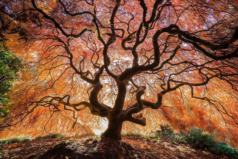 Kubota Garden Seattle, Washington | Photography the Beautiful ...
