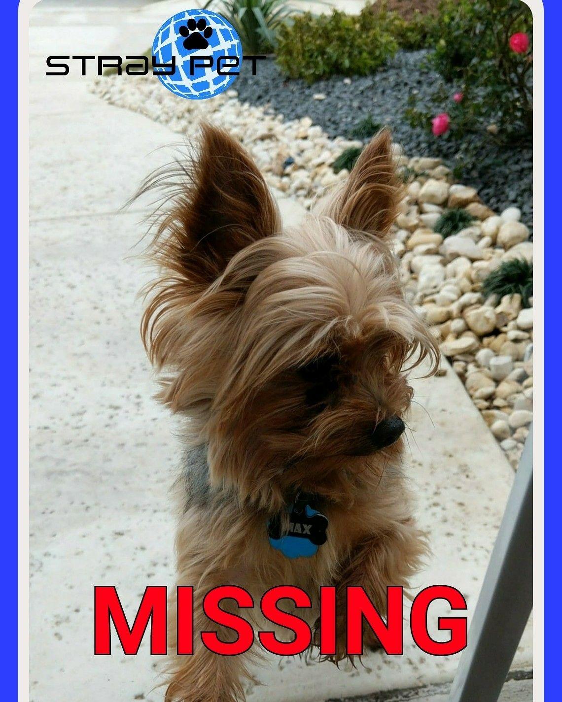 Missing Pet Alert San Antonio, Texas (78249) https