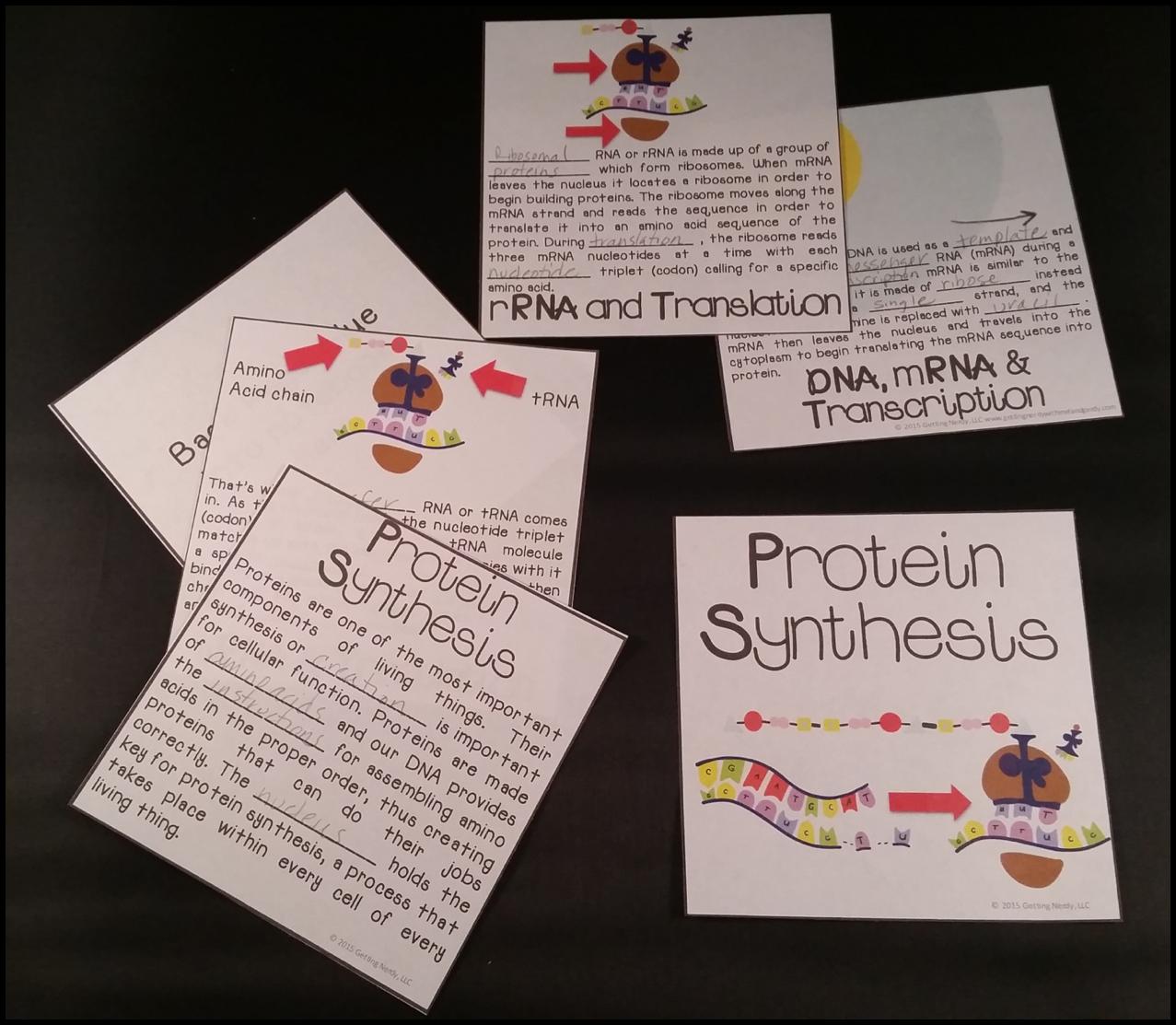 Science Interactive Notebook Genetics Interactive Science Notebook Interactive Notebooks Interactive Notebook Activities [ 1113 x 1277 Pixel ]