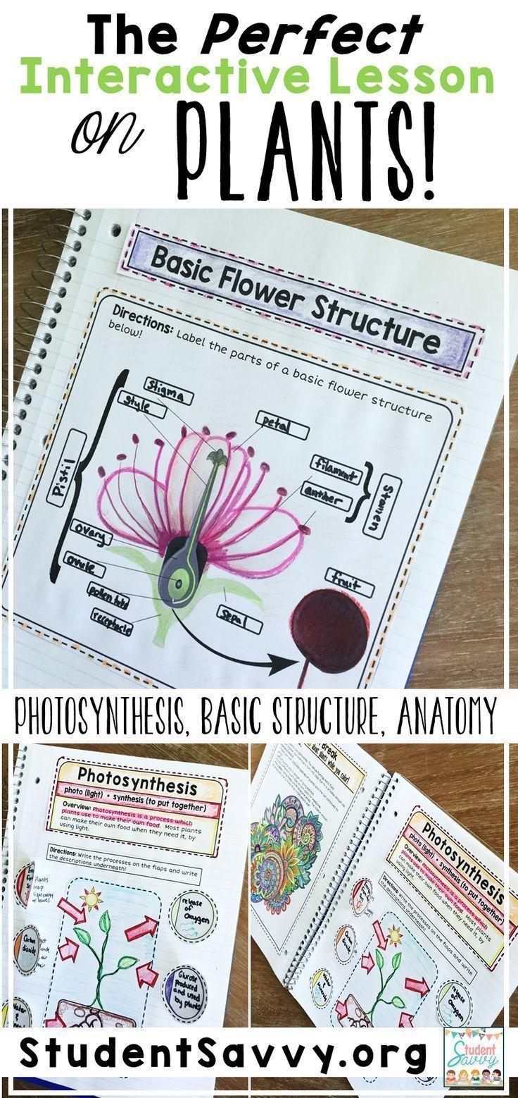 Photosynthesis Interactive Notebook Interactive