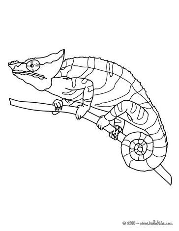 Chameleon coloring page. Perfect coloring sheet for kids. More ...