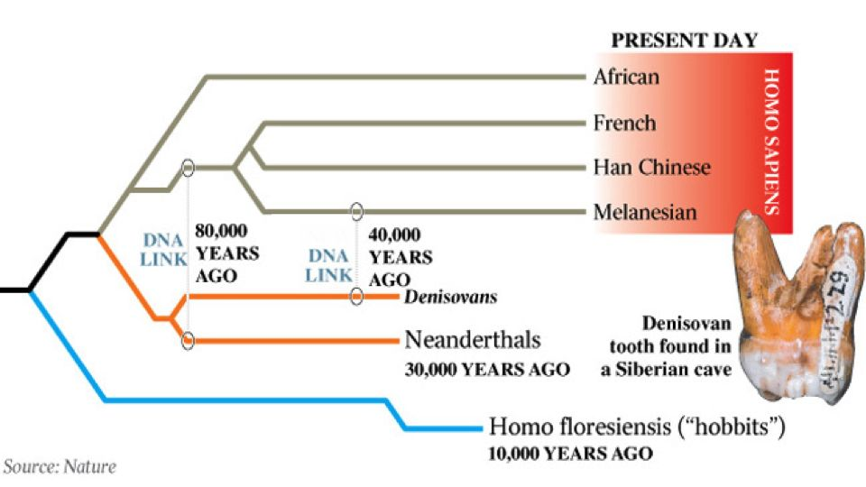 New dna evidence could explain what happened to the neanderthals ccuart Image collections