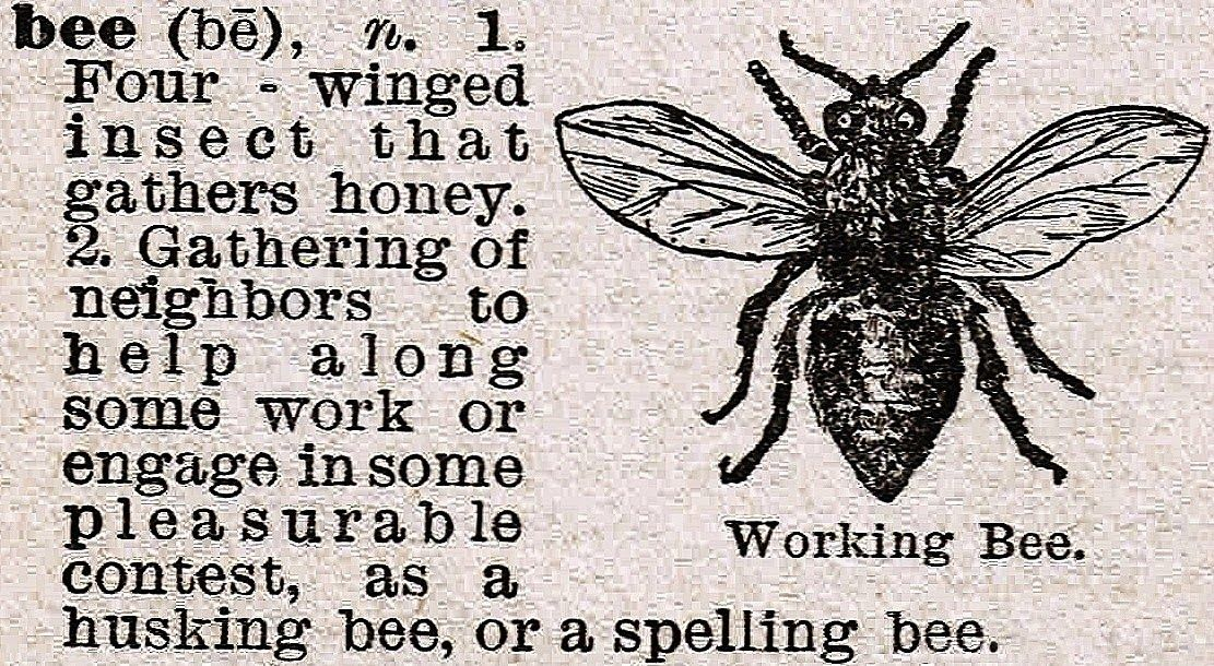 Bee Image and Dictionary Definition | Pinterest | Dictionary ...