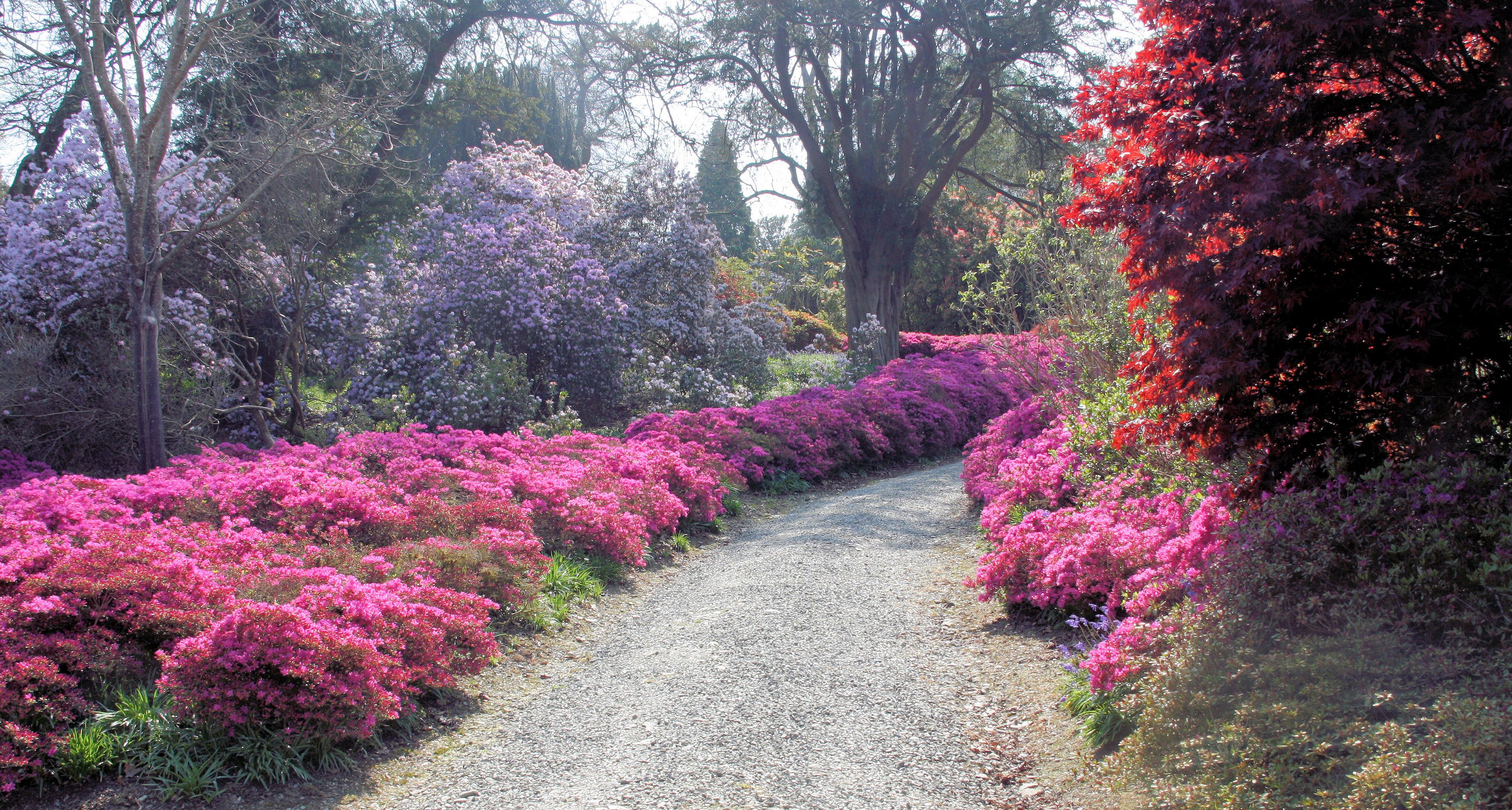 Image result for Mount Congreve Gardens