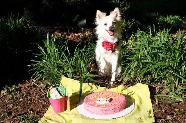 Happy Birthday, Josie!
