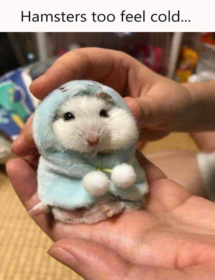 70 Funny Animal Memes Adorable Animals Animals, Cute