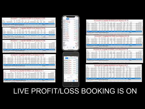 5 forex profitable trader category