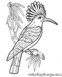 Image Result For Bird Pictures Hoopoe Bird Coloring Pages Bird