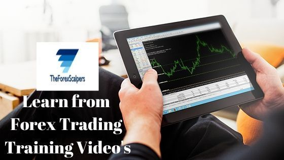 Forex trading training video p l forex network chicago