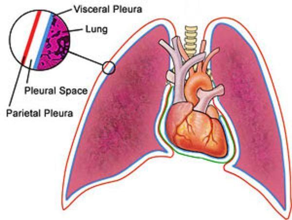 staging lung cancer staging lung cancer | Healt information ...