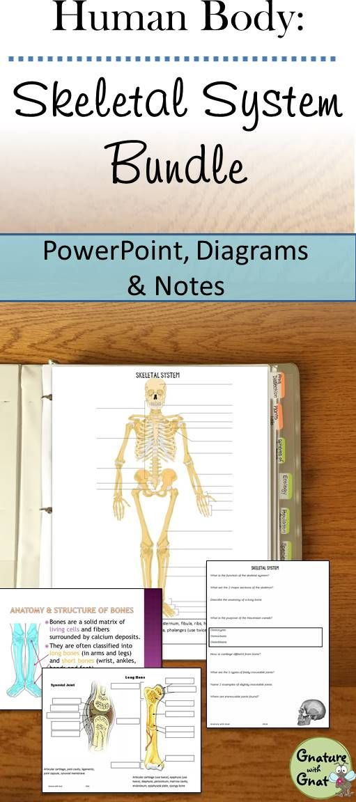 Skeletal System Unit: PPT, Doodle Notes, Diagrams, Activities, and ...
