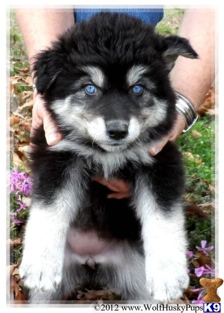 I want her! RARE HYBRID PUPS Adorably Cute Animals