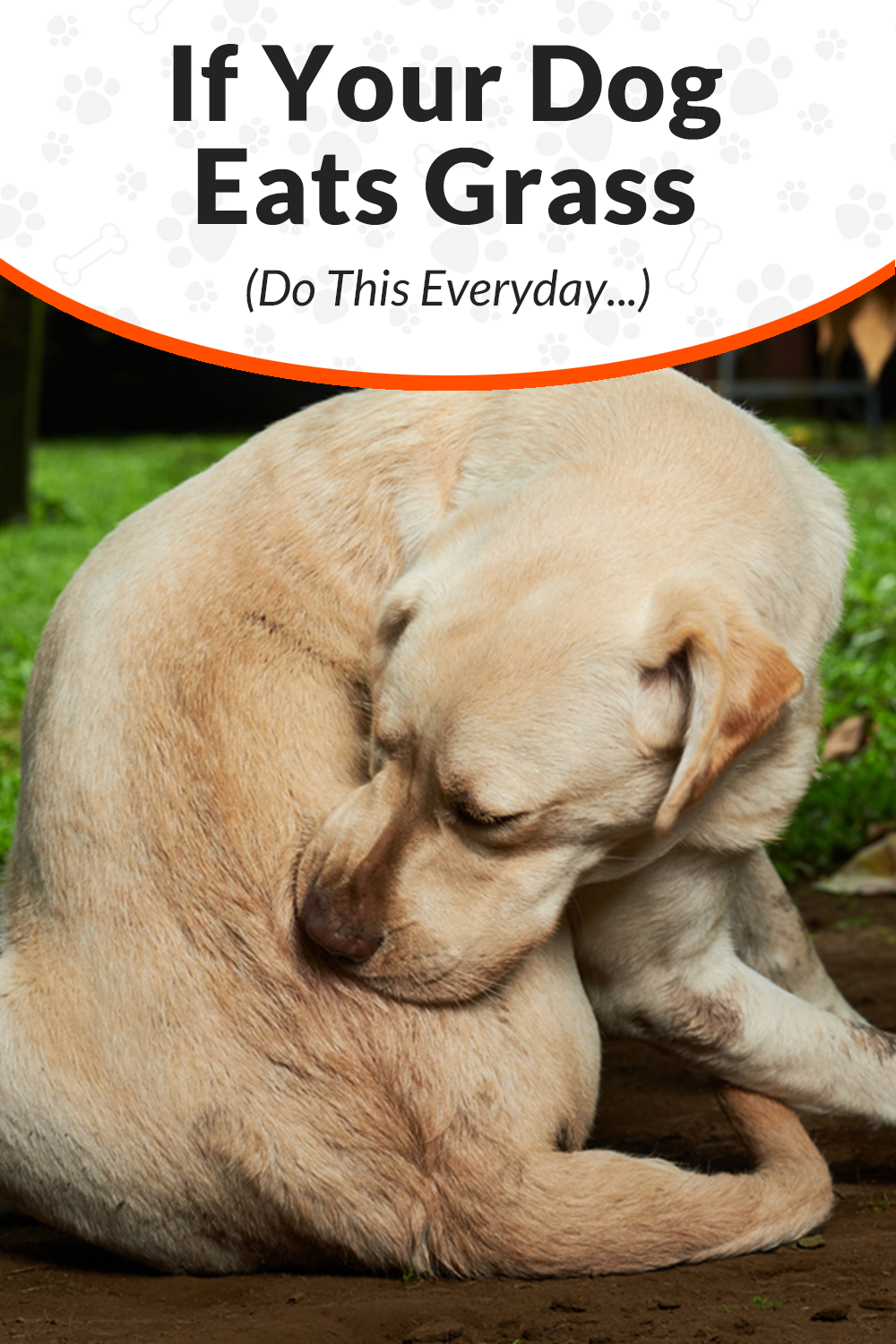 Do This Every Day Dogs Dog Nutrition Dog Care
