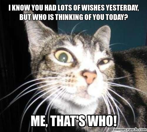 Pin By Diane Trix On Cats W Quotes Funny Cat Faces Funny Animal Faces Funny Cat Memes
