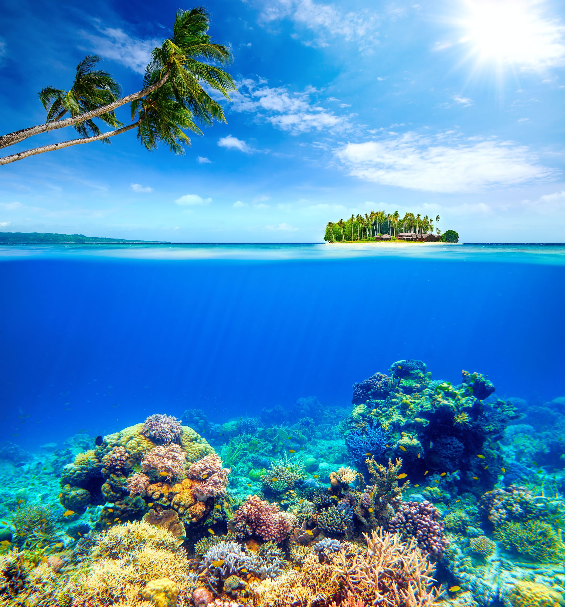 Beach Island: Beauty Above And Below Water #beauty #coral #island #beach