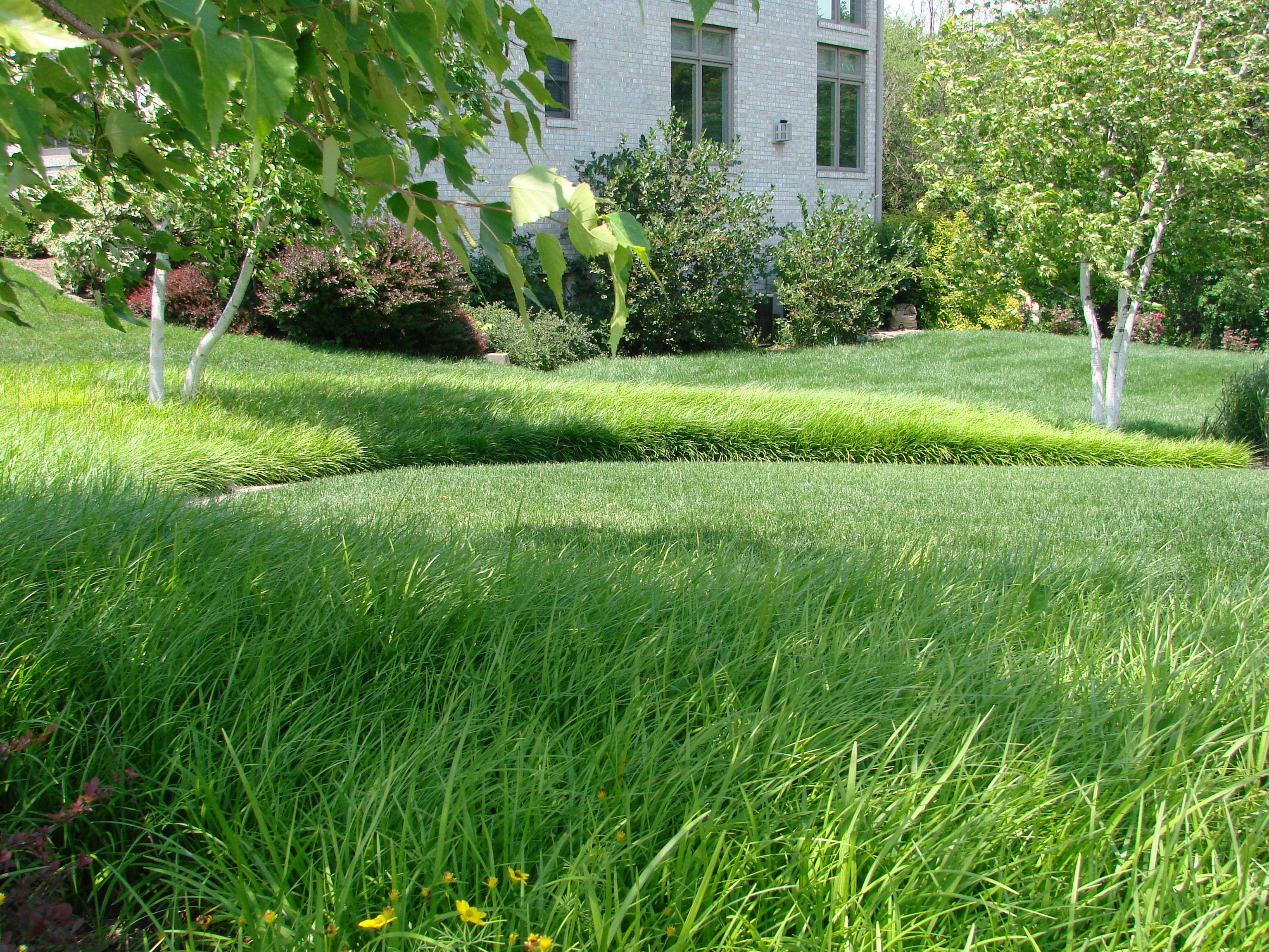 Liriope Spicata Modern Garden Plants Landscape